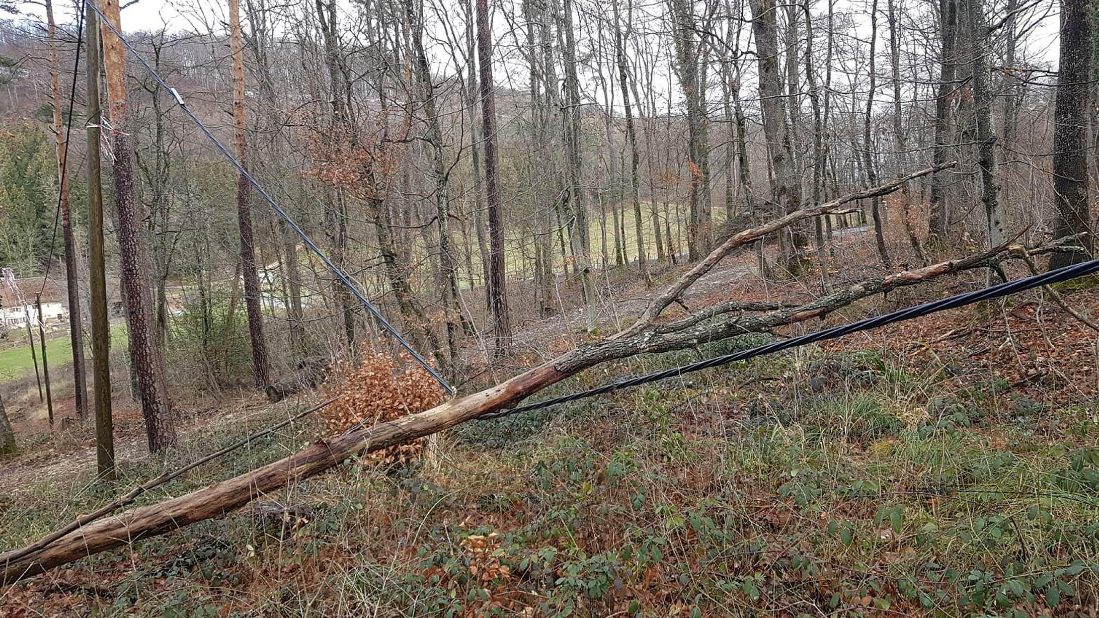 Ein umgestürzter Baum liegt im Wald auf einer Stromleitung